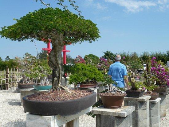 Bonsai Picture Of Wigert S Bonsai North Fort Myers Tripadvisor