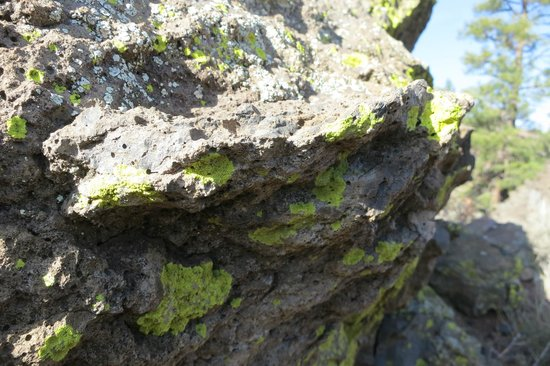 Sunset Crater Volcano National Monument: why did the algae marry the fungus?