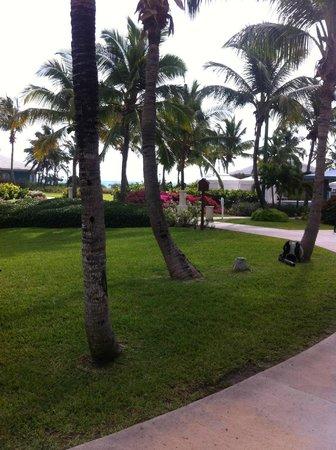 Sandals Emerald Bay Golf, Tennis and Spa Resort : jardin