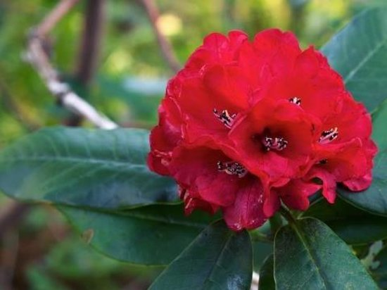 Himalayan Abode Travels and Tours Treks and Expeditions - Private Kathmandu Day Tour: Rhododendron