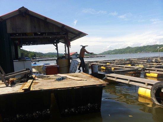 Kampong Ayer - Venice of East: Pudak Fish Farm