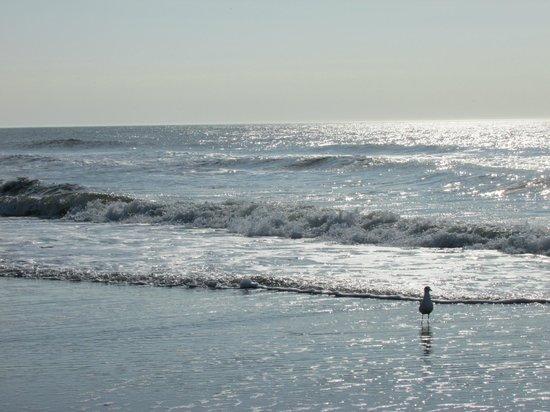 Marriott's OceanWatch Villas at Grande Dunes: Beautiful Morning