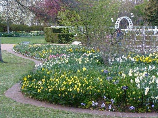 Missouri Botanical Garden: Spring blooms all around