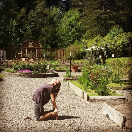 Applewood Inn: Organic Garden & Farm