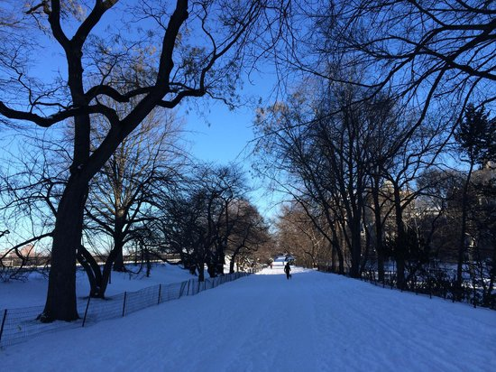 Central Park : winter in CP