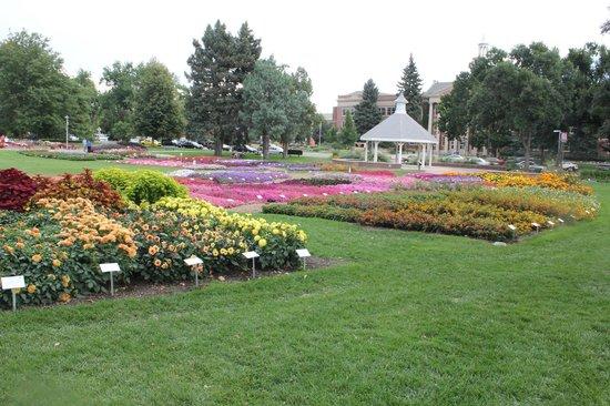 Annual Flower Trial Garden: Gardens at CSU