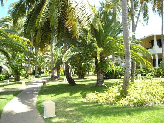 Bavaro Princess All Suites Resort, Spa & Casino : vegetation