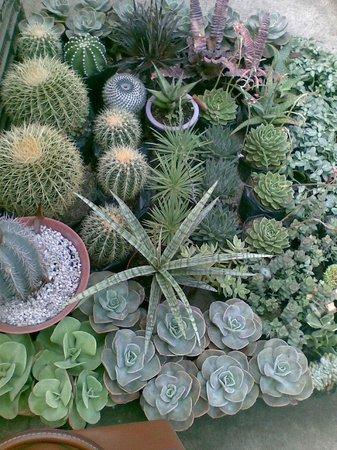 Quezon Memorial Circle: cactus (succulents)
