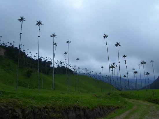 Salento, Colombia: Valle del Cocora