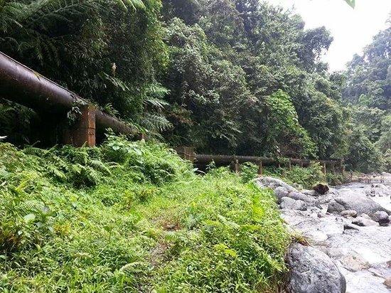 Ditumabo Falls: lush greenery environment