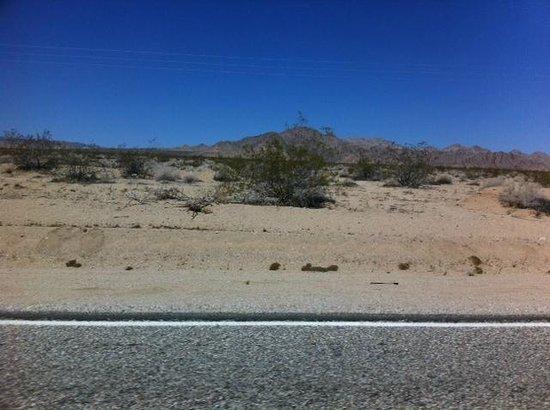 Mojave National Preserve: Along Amboy Rd. 1