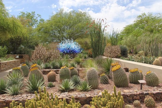 One Of The Chihuly Exhibits Picture Of Desert Botanical Garden Phoenix Tripadvisor