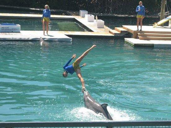 Miami Seaquarium: Función de delfines