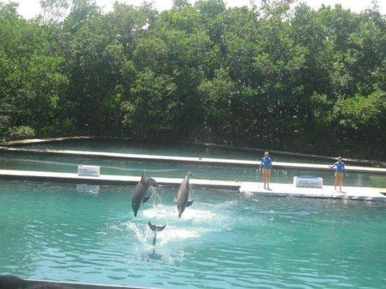 Miami Seaquarium: Los delfines