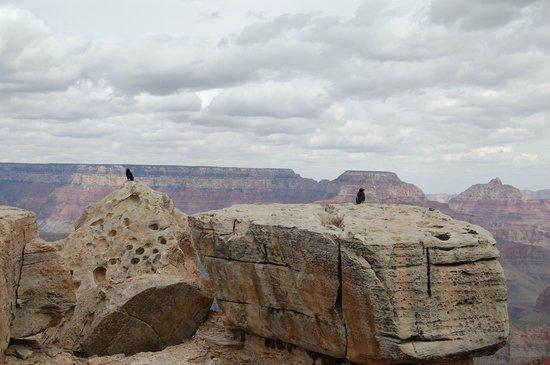 Grand Canyon Tour Company - South Rim Bus Tour : グランドキャニオンは少し曇り空で寒さが残念でした