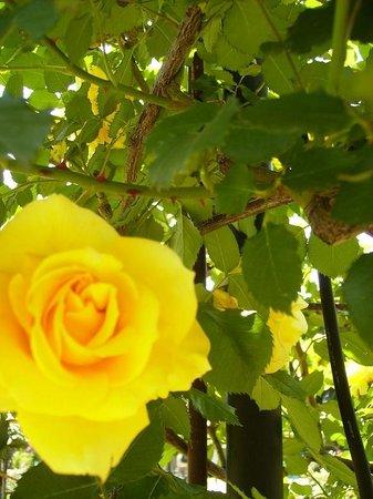 Hamadera Park: たくさんの種類のバラがあります