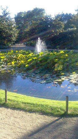 Jardin Botanique de Tours : Fontaine aux nénuphars (proche de la serre)