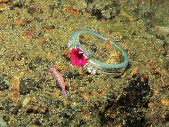 Lembeh Strait : tiny nudibranch