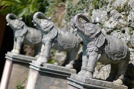Parco Scherrer: Elefanti indiani