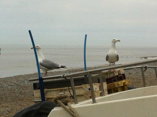 Chimneys B & B: Seagulls at Cromer