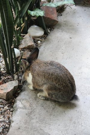 Emily Travellers' Home: Playboy...The rabbit!