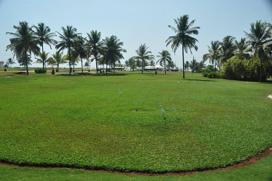 Holiday Inn Resort Goa: Газон с цаплями