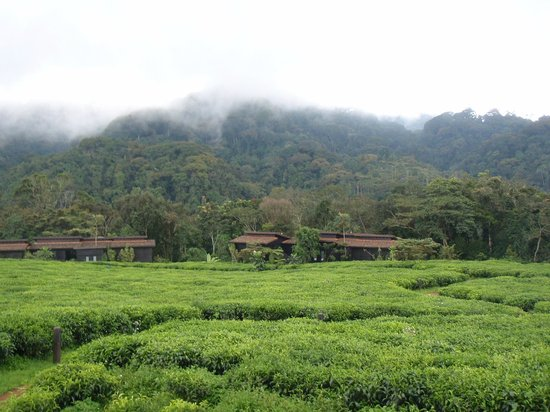 Nyungwe Forest Lodge: Nested in the tea plantation at the edge of the rain forest