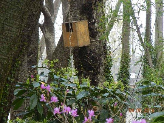 Forest Inn Showakan : 昭和の森の野鳥の巣箱