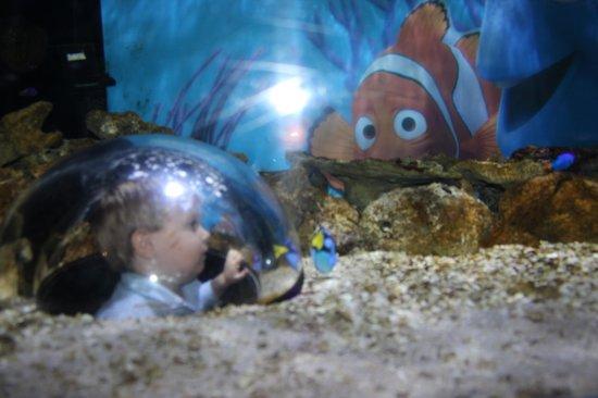 Fish in the sea dating in Brisbane