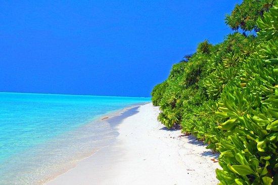 Vacation Home : Thoddoo Beach