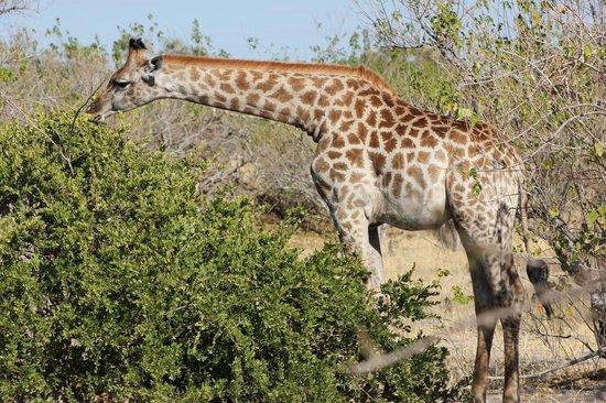 Okavango Delta: Unbelievable wildlife in the mighty Delta