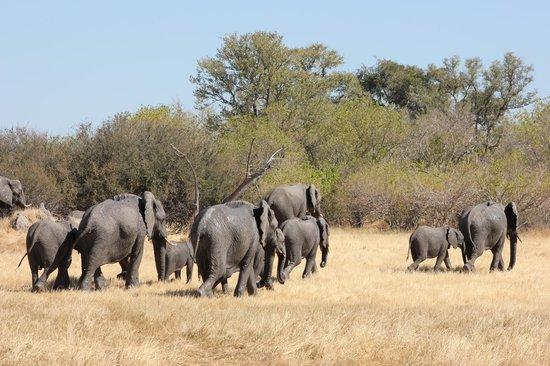 Okavango Delta: Unique wildlife