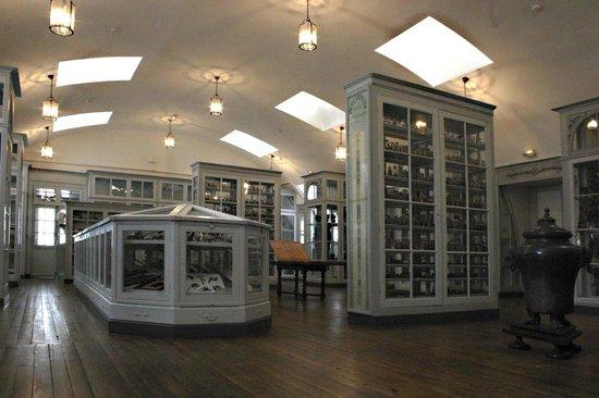Musée De L'Ecole De Médecine Navale : Les Collections