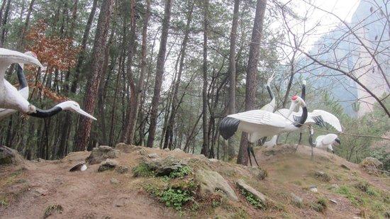 Xiandu Scenic Aera of Lishui : Журавли в приветственном поклоне