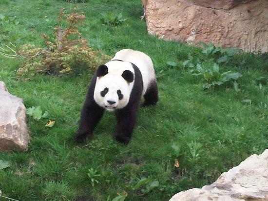 Les Jardins de Beauval : Le Zoo des Pandas