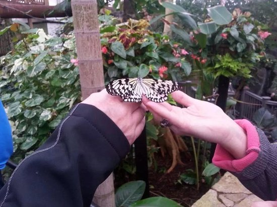 Franklin Park Conservatory and Botanical Gardens: Memorable afternoon at the butterfly exhibit
