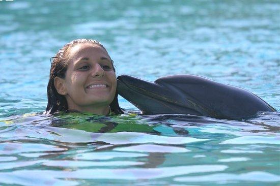 Dolphin Bay At The Atlantis - Royal Swim