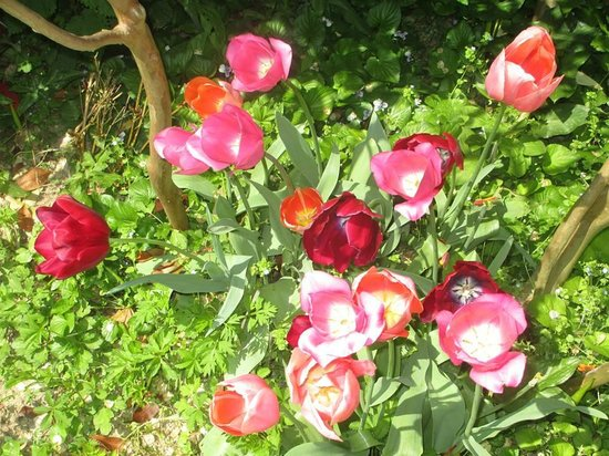 Mulino Dei Marchesi Eroli: fioriture