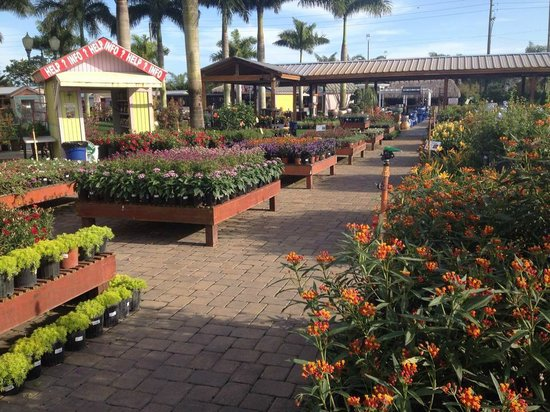 Butterfly Pavilion at Flamingo Road Nursery Davie FL Top Tips