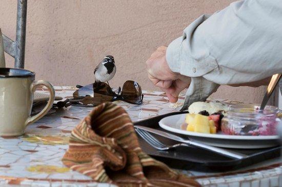 Borrego Valley Inn: breakfast companion