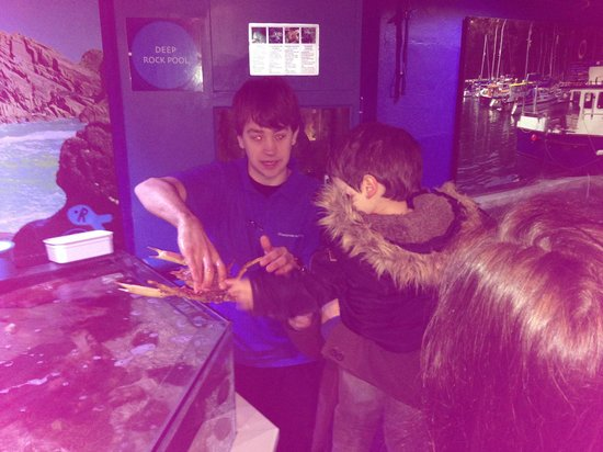Ilfracombe Aquarium : Hands on with the sea creatures!