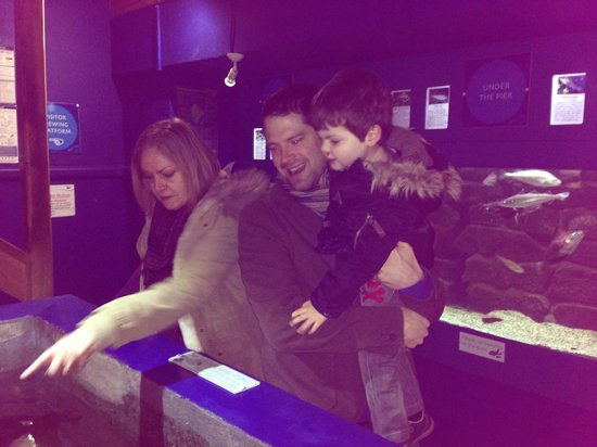 Ilfracombe Aquarium : Finding out about local fish species!