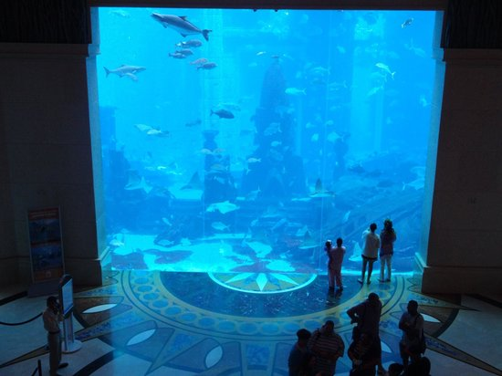 Atlantis the palm fish tank picture of atlantis the for Fish hotel tank