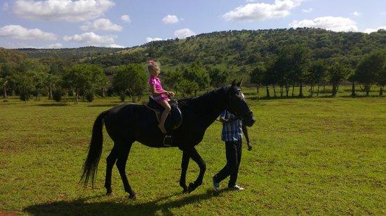 WoodRidgePalms Boutique Hotel: kids horse riding