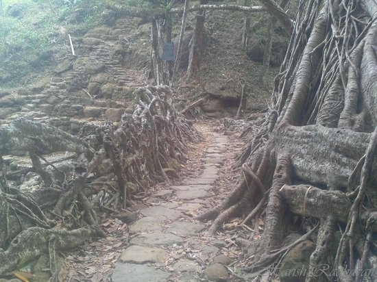 Roots Bridges: The Living Root Bridge