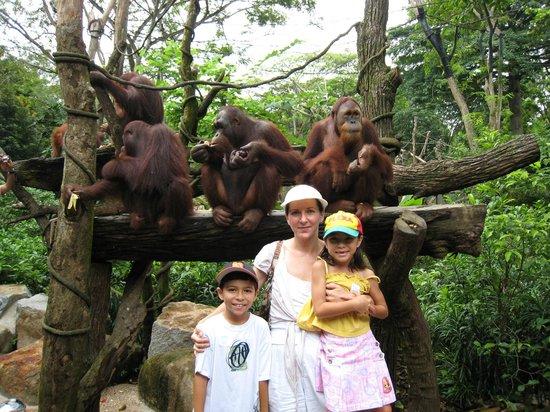 Singapore Zoo: Orangutans