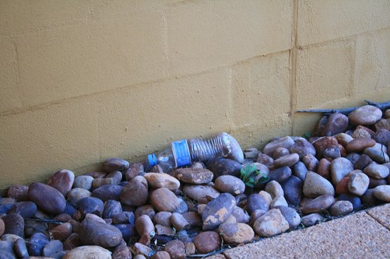 Desert Gardens Hotel, Ayers Rock Resort: our garden area