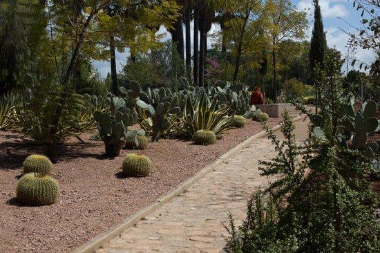 Jardin Jnan Sbil : Всевозможные кактусы и агава