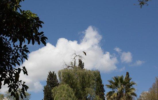 Jardin Jnan Sbil : В небе парят аисты