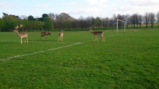 Phoenix Park: Playing Football or Rugby?